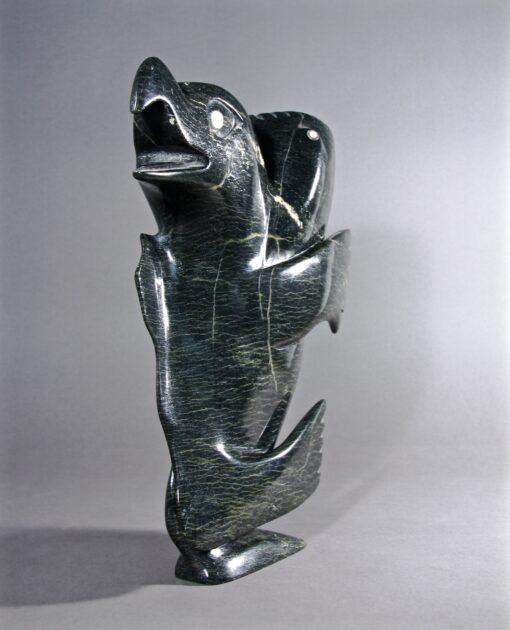 Toonoo Sharky-Esprits
