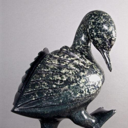 Pudlalik Shaa-Oiseau